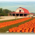 Pumpkins & Jack O' Lanterns in All Sizes
